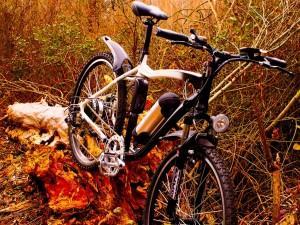 Guide pratique pour acheter un vélo